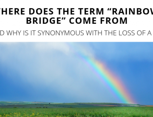 picture about Rainbow Bridge Poem Printable titled Initial Rainbow Bridge Poem Printable Variation for Totally free