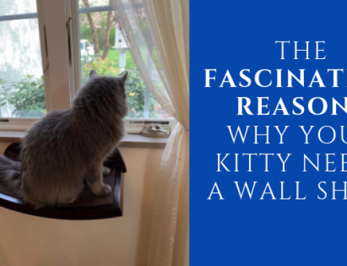 The Fascinating Reasons Why Your Kitty Needs a Cat Wall Shelf