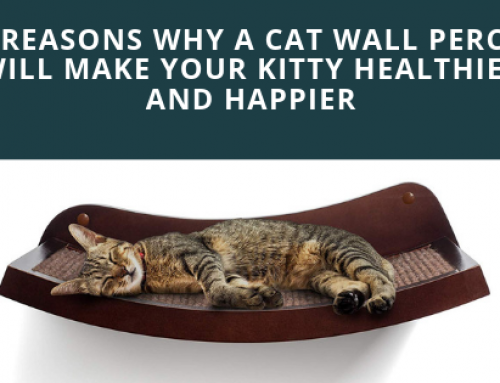 5 Reasons Why a Cat Wall Perch Will Make Your Kitty Healthier and Happier